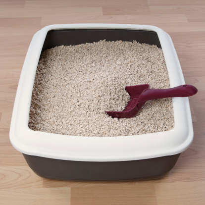 Essential Tips to Choosing What to Use for Rabbit Litter