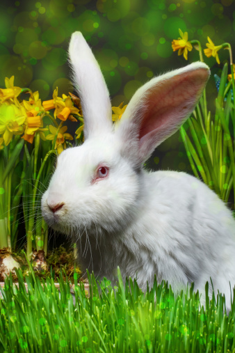 4 Things You Shouldn't Feed Fluffy to Satisfy That Rabbit Food Craving