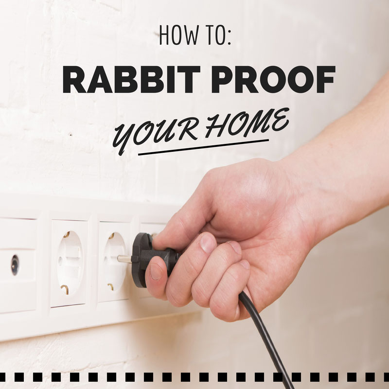 Rabbit Proofing Your Home; Don't Worry It's Easy!