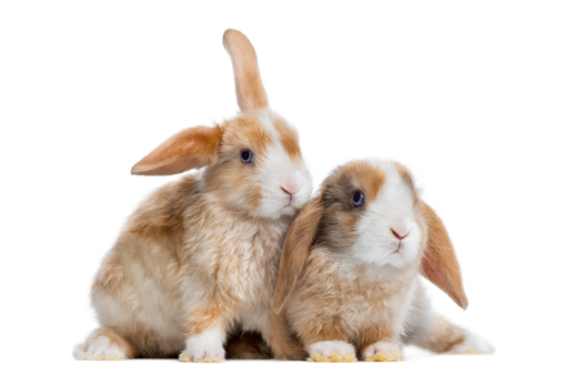No Lonely Bunnies, Rabbits Need Friends