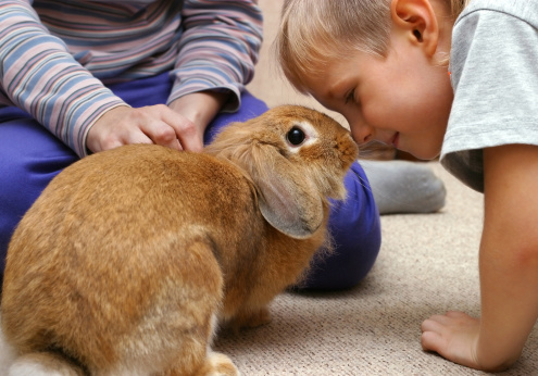 Help! How to Stop a Rabbit From Chewing Carpet!