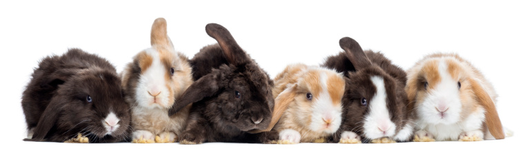 What NOT to Do When Bonding Your Pet Rabbits