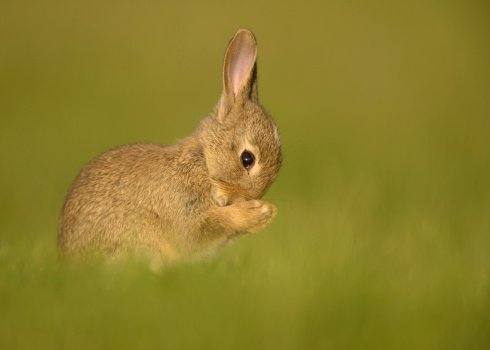 3 Common Health Issues in Rabbits That May Be Why They Won't Eat