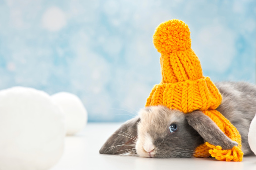 How to Keep Your Rabbits Warm This Winter