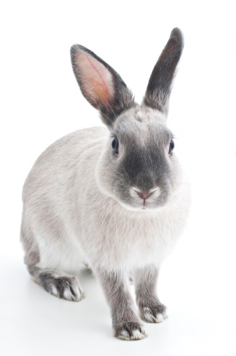 Keep Your Senior Bun Healthy With First Or Second Cut Hay For Rabbits
