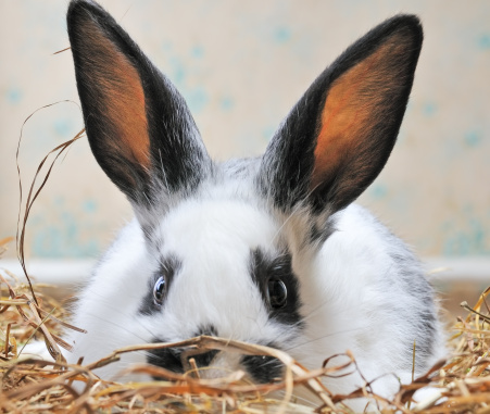 What is the Importance of Checking Your Rabbits Teeth