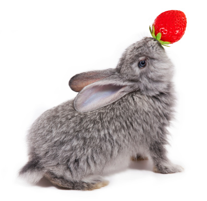 Getting a Rabbit to Eat: What about fruits?