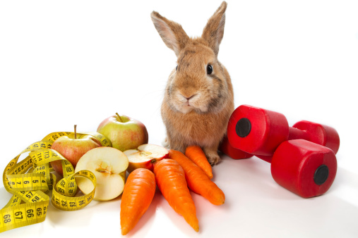 Question of the Day: What do bunnies eat?