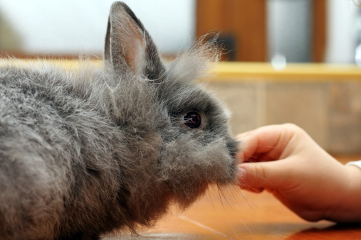get rabbit to eat
