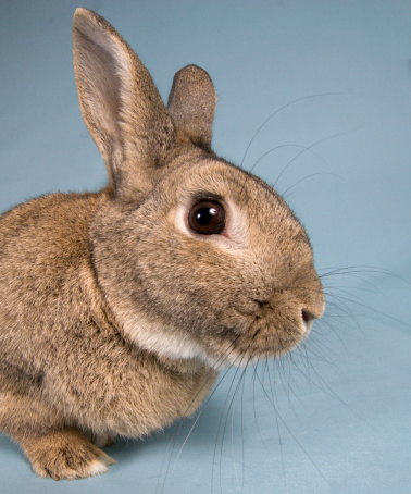 Rabbit News: The Story of a Human and Their Famous Rabbit
