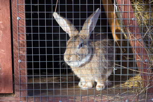 Rabbit Hutches: What Are Your Best Options?
