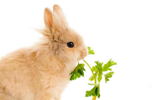 Bunny Food List: Which Fruits, Vegetables and Herbs Are Safe?