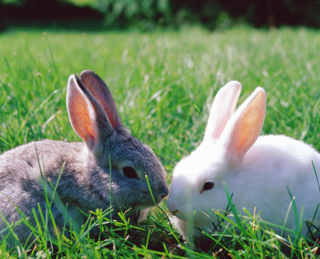 Basic Rabbit Care: How to Create Bun Friends Forever with Bonding