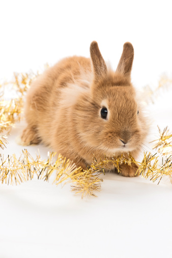 Holiday Safety Tips for Pet Rabbits