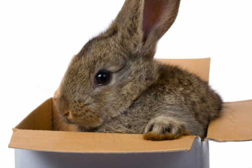 Rabbit Food Question: How Do I Stop My Rabbits From Eating Cardboard?