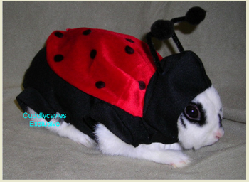 Hare Raising Halloween Costumes & Rabbit Care Safety for Your Bun