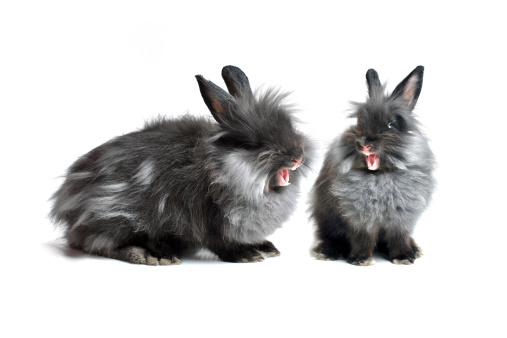 Help! I have a Grumpy Rabbit Thumpy