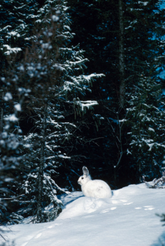What Do Rabbits Eat During The Winter?
