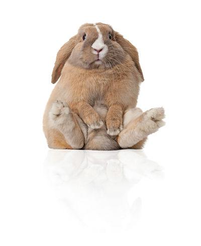 Is Hay the Right Rabbit Food for My Bunny to Help Curb Obesity?