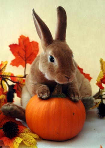 Homemade Rabbit Food Recipe Pumpkin Treats!