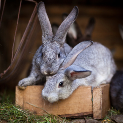 Baby It's Cold Out There; Winterizing Your Rabbit Hutch For Winter