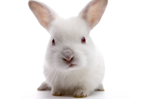 Could My Rabbit Be Allergic to The Grass Hays?