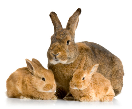 Care During the Different Life Stages of Rabbits
