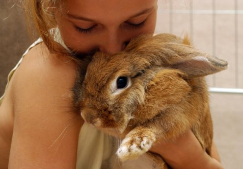 Rabbit Care Fun: You Know You're a Rabbit Owner When…