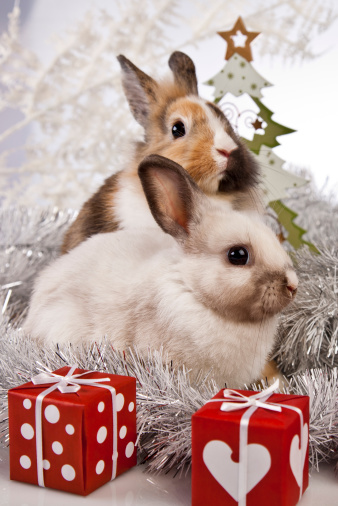 Is It Safe for a Rabbit to Chew Wrapping Paper, a Christmas Tree?