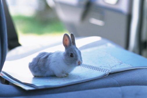 The Proper Rabbit Care for Your Next Road Trip