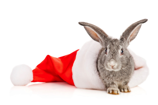 What Do Rabbits Eat for a Christmas Feast?