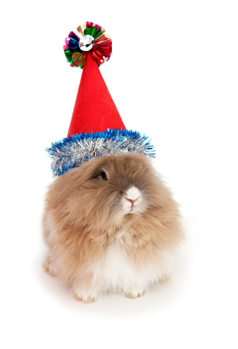 Rabbit Care: New Year's Resolutions For You & Your Rabbit