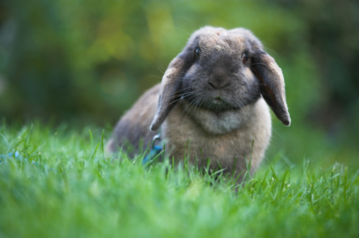 How to Keep a Rabbit Cool In the Summertime