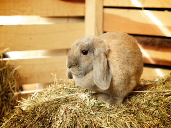 The Best Rabbit Hay Comes From Online, Just Ask Your Rabbit