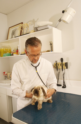 Choosing the Right Rabbit Veterinary Care Can Mean All the Difference