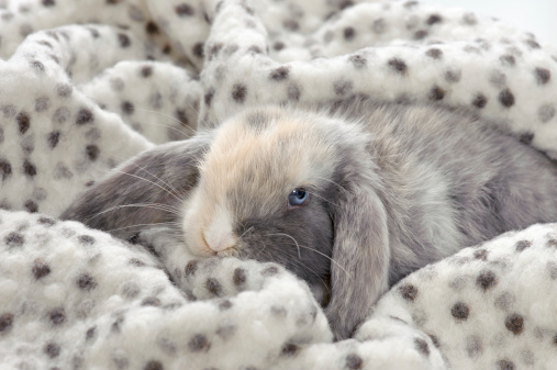 Which Rabbit Hay Bedding Is Best for My Little Bun?