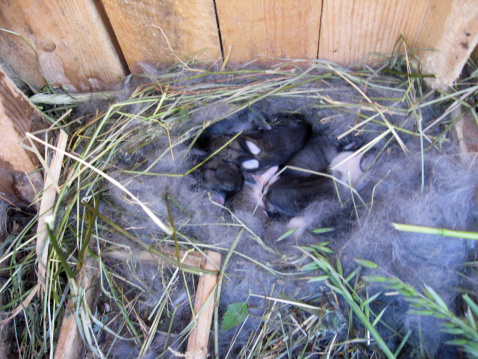 Momma Stopped Caring, How to Take Care of Baby Bunnies?