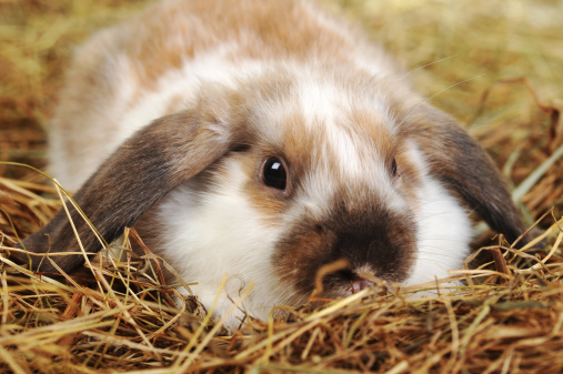 The Best Rabbit Hay to Keep Your Rabbit Healthy and Thriving