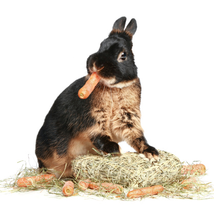 Chew on This: Factors to be Considered in Rabbit Keeping