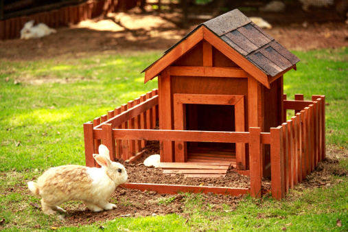 8 Rabbit Care Tips for Setting Up a Rabbit's Cage
