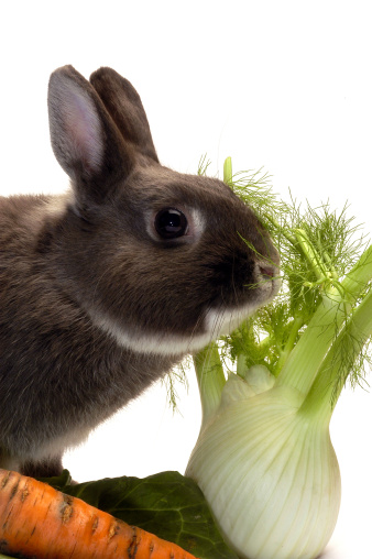 HAY! Are You Feeding Your Rabbit Enough Timothy and Alfalfa Hay?