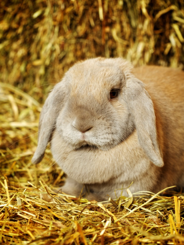 Found Rabbit Hay For Sale? Get These Tips When You Buy Hay Online