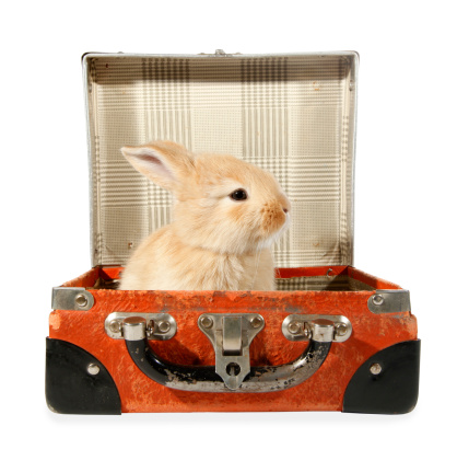 Traveling With Rabbits Can Make Traveling More Fun