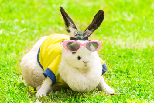 8 Proven Steps to Keeping the Hop in Your Rabbit
