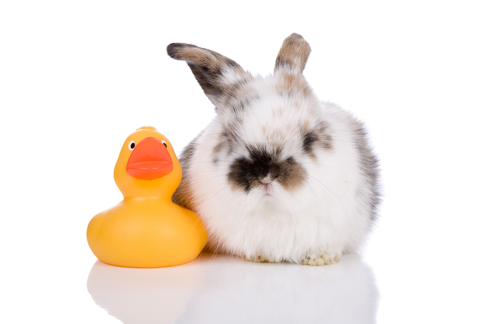 Rabbit Cleaning Tricks You Must Know!