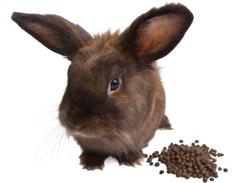 Bunny Hay Tips: What to Feed Your Small Pet