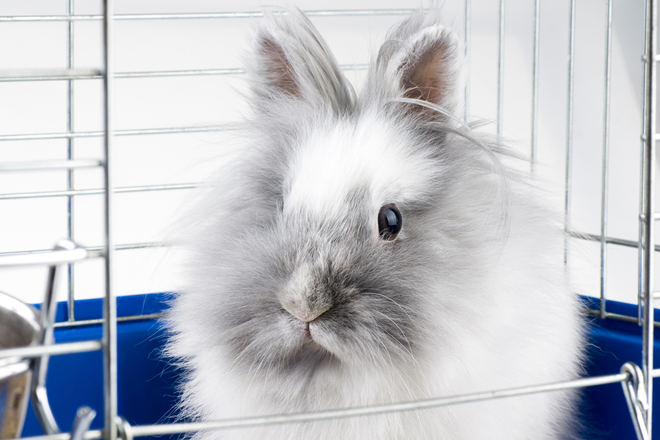 Rabbit Care Tips: Deciding On a Cage