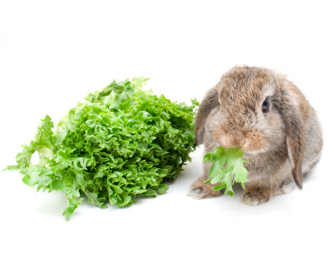 4 Rabbit Food Myths You Should Never Believe