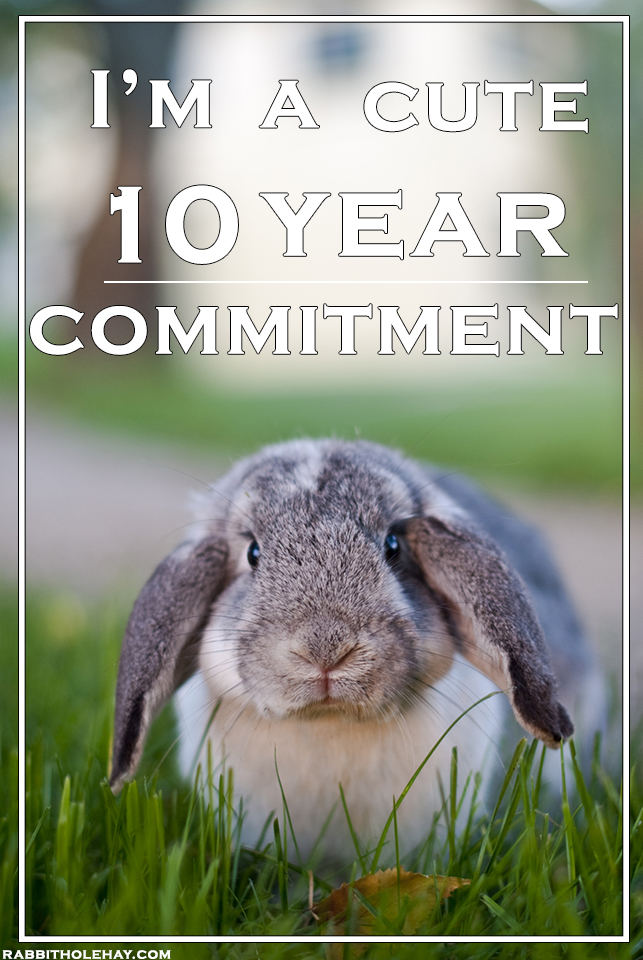 Thinking of Gifting a Rabbit For Easter? Consider What Rabbit Care Really Entails
