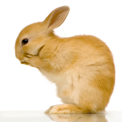 4 Rabbit Grooming Techniques